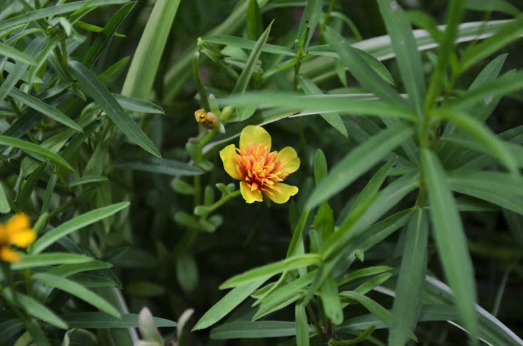Тархун трава — Лечебные свойства